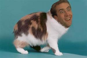 NICHE TUMBLR — NICOLAS CAGE CATS