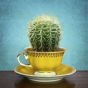 Comment Entretenir Un Cactus : comment planter ses cactus ~ Nature-et-papiers.com Idées de Décoration