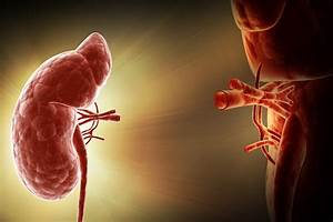 Opinion Divided On Live Donor Kidney Transplants