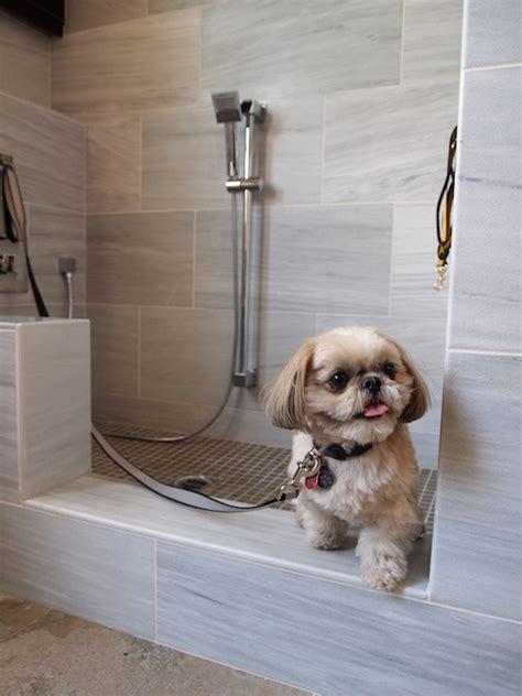 dog shower transitional laundry room standard