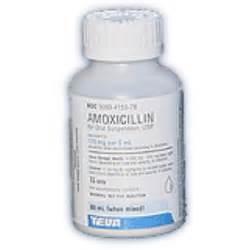 amoxicillin for cats amoxicillin suspension cat antibiotics petcarerx