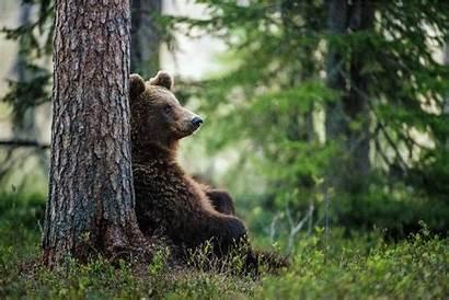 Bear Brown Market Does Bitcoin Orso Bears
