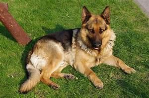 Did u know? | One Dog Love