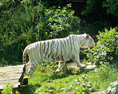 zoo zoos europe colchester tiger kingdom united alux