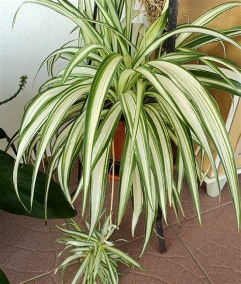 Zimmerpflanzen Im Schlafzimmer by Pflegeleichte Zimmerpflanzen Im Schlafzimmer Sorgen F 252 R
