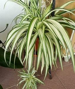 Pflanzen Im Schlafzimmer : pflegeleichte zimmerpflanzen im schlafzimmer sorgen f r ruhigen schlaf ~ Indierocktalk.com Haus und Dekorationen