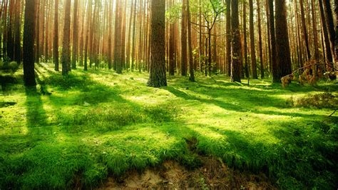 green forest wallpaper beautiful forest green wallpaper hd 510 wallpaper high Beautiful