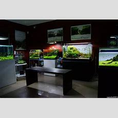 Simon's Aquascape Blog