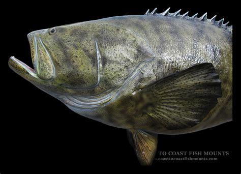 fish grouper goliath mount fiberglass
