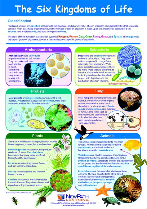 Learning Poster  Frey Scientific & Cpo Science