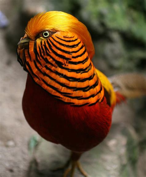 The 10 Most beautiful Exotic Birds In The World