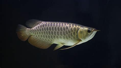 fish people kill   public radio international