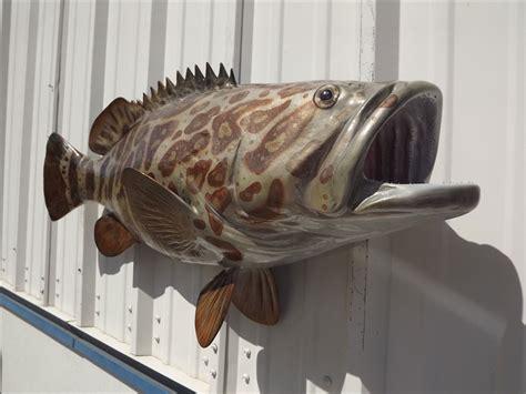 grouper goliath fish mount