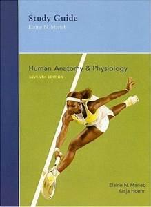 9780805373059  Human Anatomy  U0026 Physiology  Study Guide  - Abebooks
