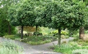 Kleine Bäume Für Garten : hausb ume f r kleine g rten garten haus b ume kleine g rten und b ume garten ~ A.2002-acura-tl-radio.info Haus und Dekorationen