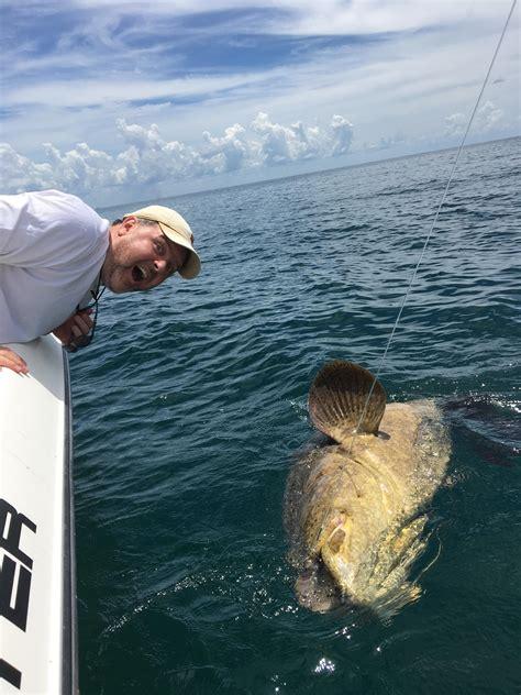 grouper goliath gulf mexico pound sarasota hooked fl july comments jack