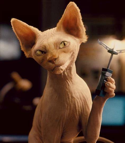 kitty galore  disney villain wiki fandom