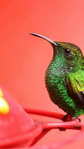 Wallpaper Bird, 5k, 4k wallpaper, green, pink, eyes, exotic, tropical, nature, OS #1368  Bird
