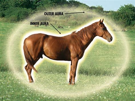 energy horses healing aura horse field training why auric auras prana