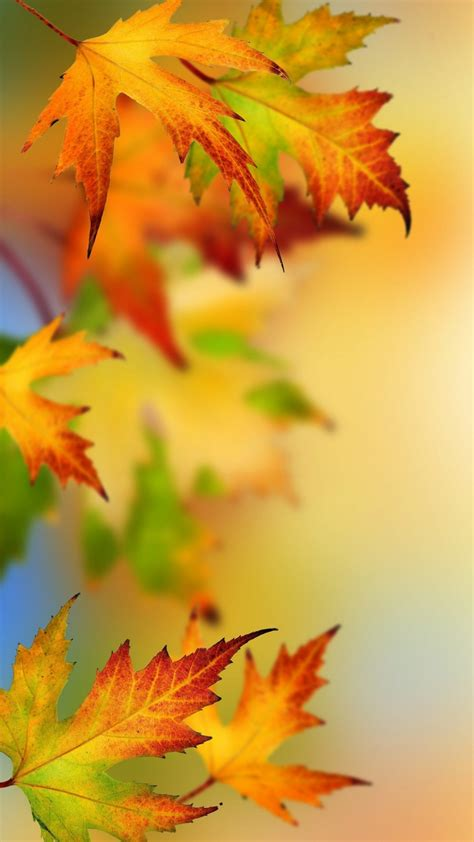 Autumn Wallpapers Iphone 7 by Autumn Hd Wallpapers For Iphone 7 Wallpapers Pictures