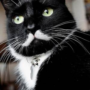 We Interview Stalin the Cat, the Latest Supreme Feline ...