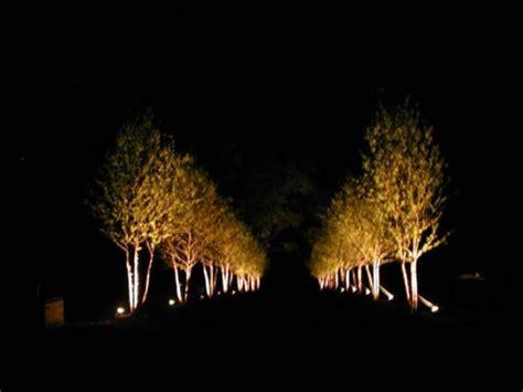 Tree Light Fixture by Photos Of Uplighting Tree Tree Uplighting Fixtures