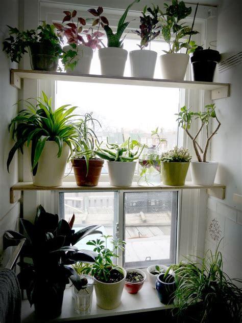 plant window shelves hanging plant shelves agian grow pinterest