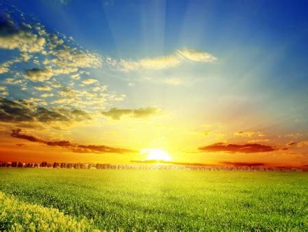 green grass open field  sunset wallpapers  day