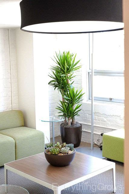 interior plant service interior landscaping by everything grows