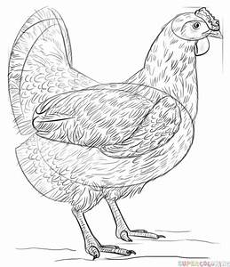 How To Draw A Chicken Step By Step Drawing Tutorials