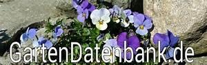 Pflanzen Bestimmen Nach Bildern : pflanzennamen mit bildern table basse relevable ~ Eleganceandgraceweddings.com Haus und Dekorationen