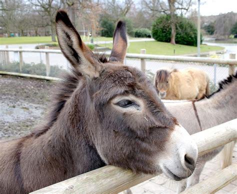 zoo karlsruhe infos veranstaltung und rundgang