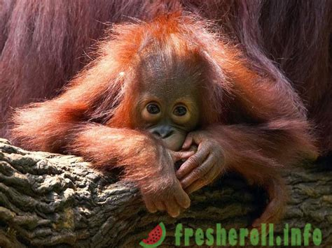 10 retas sugas, kurām draud izzušana
