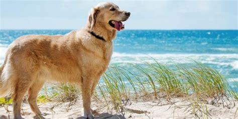 urlaub mit hund reisetipps holland