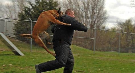 el cajon police dog attacks la mesa officer san diego reader