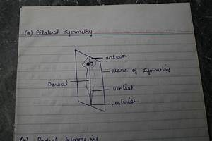 Isolated System  Bilateral And Radial Symmetry Diagram