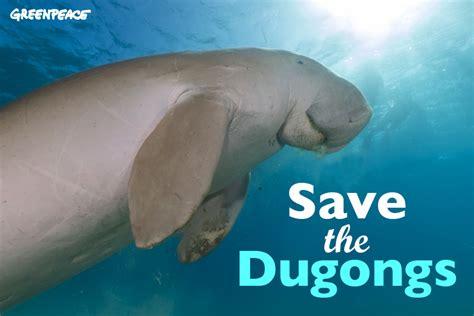 Greenpeace International | Save the dugong