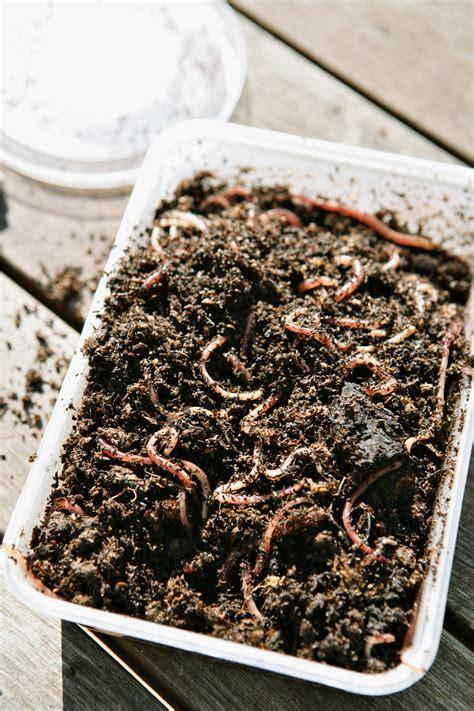 set   worm bin  vermicomposting