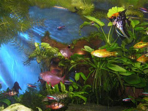 sauerstoffpumpe für aquarium ask aquarienservice klein frankfurt aquaristik aquarium service