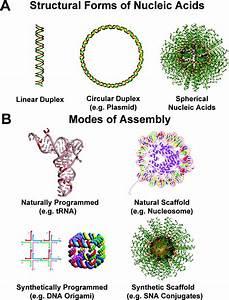 Spherical Nucleic Acids