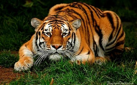 Most Beautiful Wallpapers Of Animals - most beautiful animal your spot wallpaper 11066944
