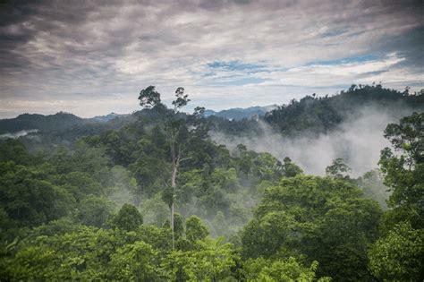 Untuk lebih jelasnya, berikut adalah uraian menyeluruh tentang ciri dari hutan tropis adalah Apa Itu Hutan hujan tropis? Ciri-ciri, Fungsi, Persebaran, dan Jenisnya