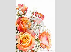 Related Keywords & Suggestions for orange white roses