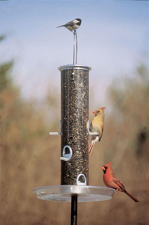 bird feeders for bird feeders creative hints for attractive design