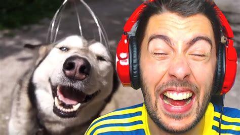 Combo Loco Animal Maritobaracus Elshowdejota Youtube