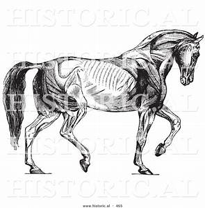 33 Diagram Of Horses