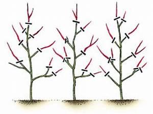Wann Apfelbaum Pflanzen : freund victoria gartenger te gmbh heckenschnitt ~ Lizthompson.info Haus und Dekorationen