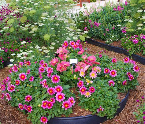 cut flower garden design garden flowers look like carnations hot girls wallpaper