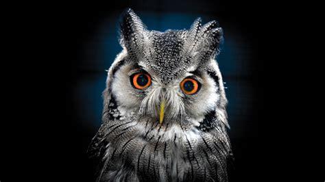 Background Owl Wallpapers by Owl Wallpaper Best Wallpaper Hd For Desktop Wallpapers13