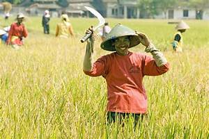 AsiaPhotoStock, rice worker poses